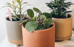 plant-friend